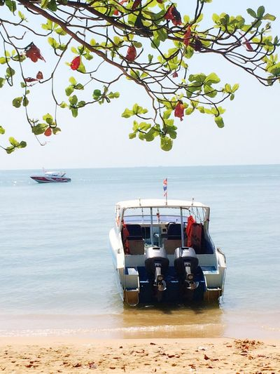 Sea Water Transportation Mode Of Transport Horizon Over Water Nature Nautical Vessel Beauty In Nature Tree Day Beach No People Sky