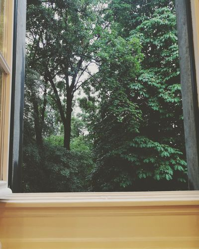 Amazon rainforest Window Tree Day Indoors  No People Close-up Forest Imagination