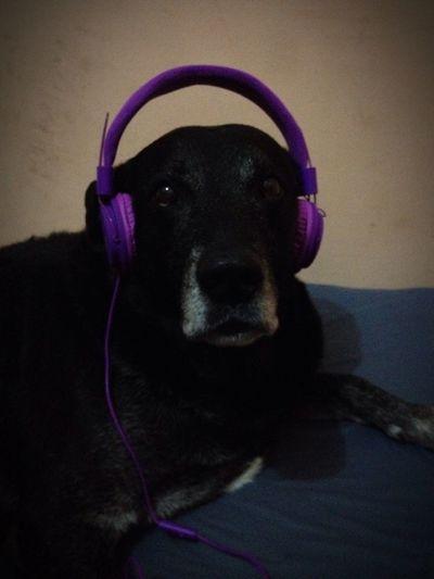 Pets Corner Max Music