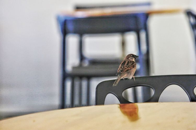 Close-up of bird perching on table