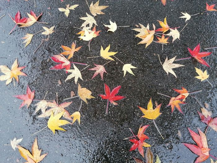 Autumn Water