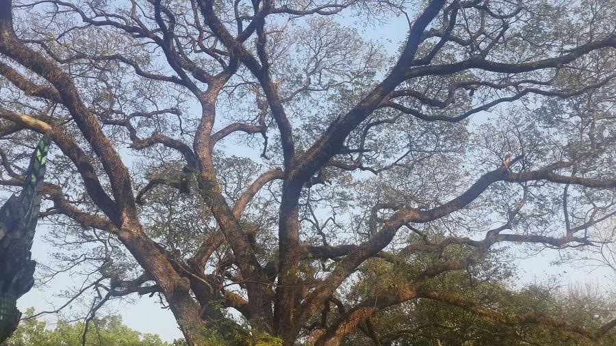 ต้นไม้ Tree Low Angle View Nature Sky Growth Beauty In Nature Branch No People Outdoors Full Frame Day Backgrounds Close-up