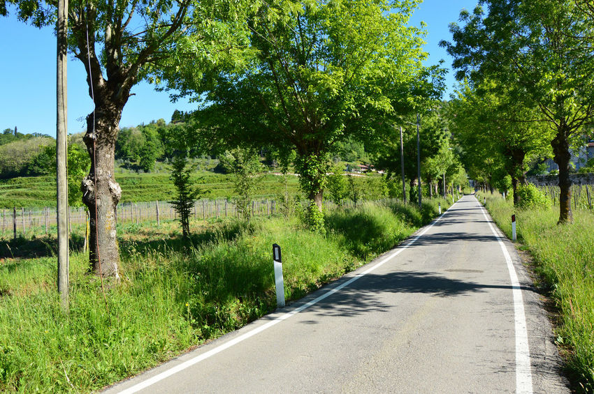 Animal Themes Astino Beauty In Nature Bergamo Bird Country Day Grass Green Growth Landscape Nature No People One Animal Outdoors Plantation Road Road Sky Street The Way Forward Tranquil Scene Transportation Tree Trees