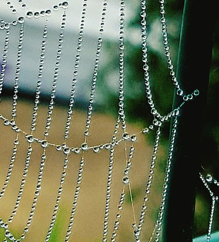 Maximum Closeness Close-up No People Outdoors Taking Photos Water Take Photos Flowing Silkweb Spidersweb Morning Dew Check This Out
