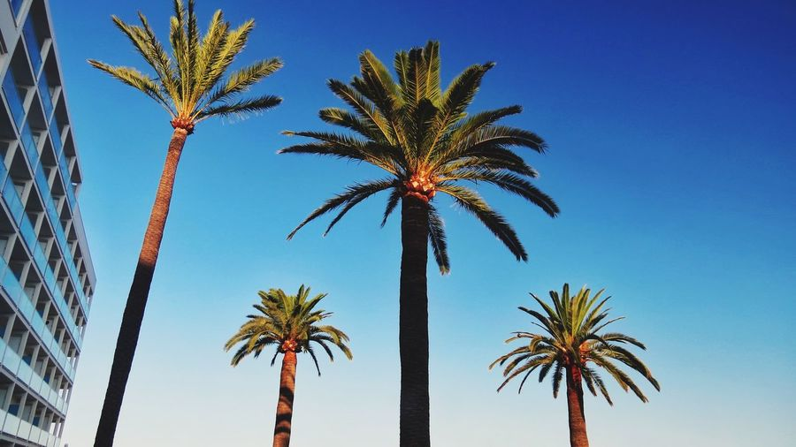 Palm Tree Tropical Climate Sky Tree Plant Low Angle View Growth