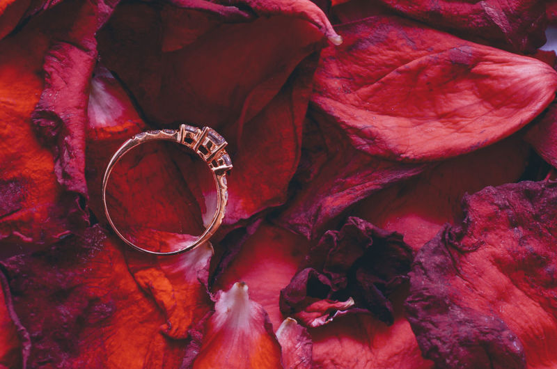 Close-up of wedding ring on red petals