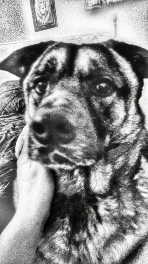Blackandwhiteisworththefight Distinguished Gentleman Faces Of EyeEm The K9GB Helping Hand Remembering How To Feel My Dogs Are Cooler Than Your Kids My Bw Obsession For Princess 💖
