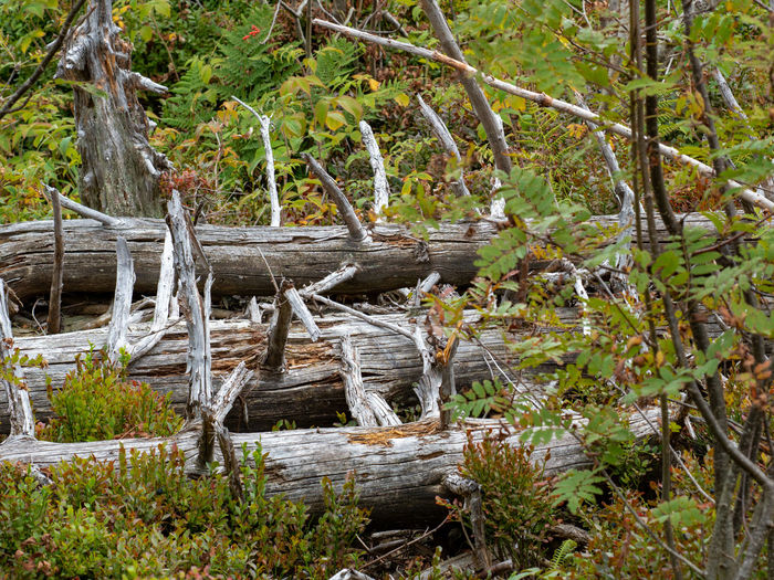 View of wooden log in forest