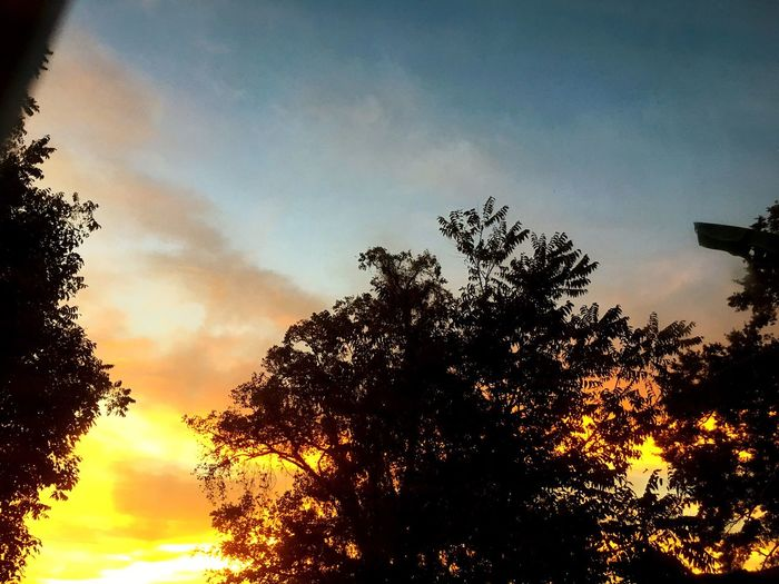 Tree Sky Low Angle View Beauty In Nature Nature Silhouette Sunset No People Cloud - Sky Growth Scenics Tranquil Scene Outdoors Tranquility Day