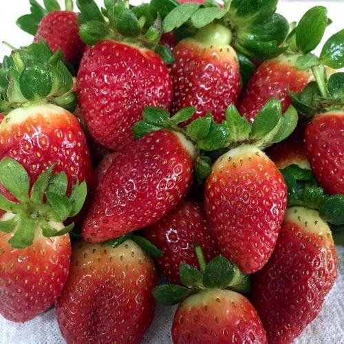 Fresas Morangos Strawberries Strawberry Fresa Morango 🍓🍓🍓🍓