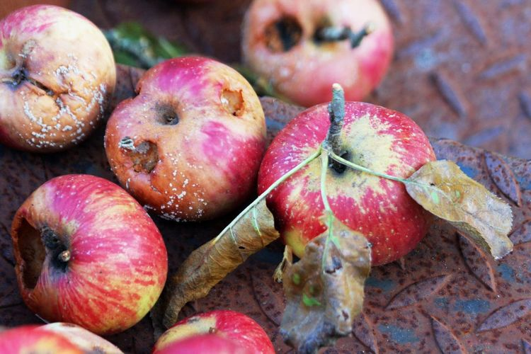 Apples Close-up Day Food Food And Drink Freshness Fruit No People Outdoors Rotten Rotting