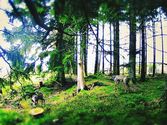 Forest Trees Nature Photography Animals In The Wild Animal Themes Animals Nature Forest Photography