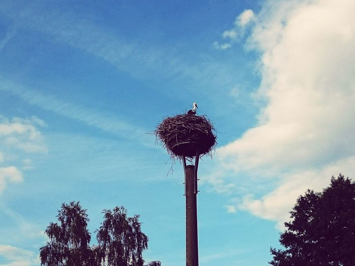 Nest Nest High Up Storch Storch Nest Looking Up Can Be So Rewarding Looking Up Birds Bird In Nest Bird High Up Higher Than Trees Spreewald