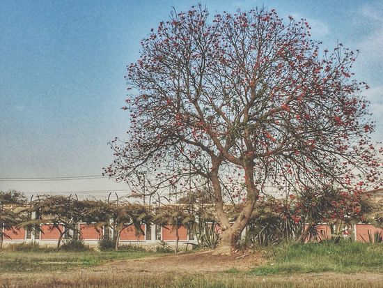 Tree Growth Sky No People Outdoors Nature Clear Sky Architecture Built Structure Day Grass Beauty In Nature Beauty In Nature Livelovecairo Liveloveegypt Grass شجر Thisisegypt مصر Iphonephotography IPhoneography