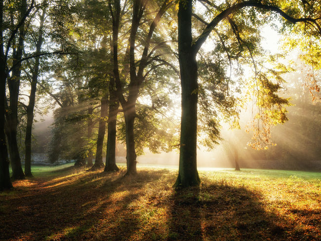 Beauty In Nature Day EyeEmNewHere Grass Growth Landscape Nature No People Outdoors Scenics Sun Sunbeam Sunlight Sunrays Tranquil Scene Tranquility Tree Autumn
