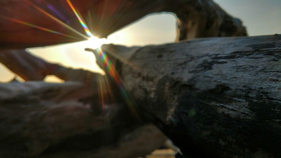 EyeEm Best Shots EyeEm Nature Lover Lobuephotos Humboldt County Nature_collection Nature Photography Smartphonephotography Motodroid Motoz Phone EyeEm Selects California Tranquility Beach Driftwood Landscape Sunstar Sunrays Sunlight Eye4photography  Enjoying The Sun Eyemphotography Looking Through No People Day Indoors  Nature Close-up Sky Visual Creativity