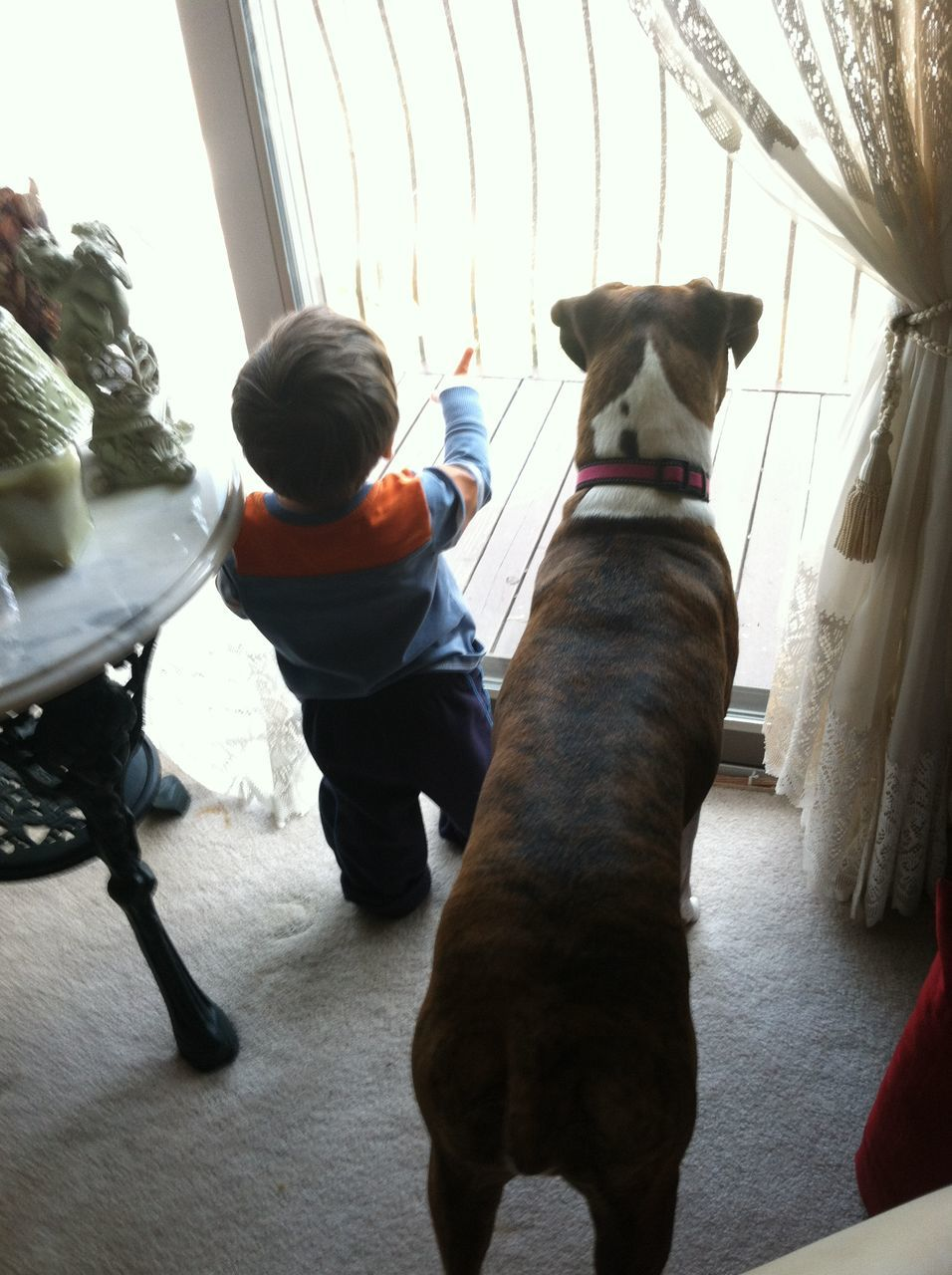 domestic animals, mammal, animal themes, pets, dog, one animal, rear view, real people, indoors, day, sitting, full length, one person
