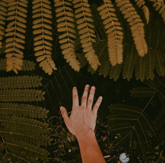 Nature Mobilephotography Philippines Zamboanga City Lost Trees Leaves Hand Man Rural Scene Human Hand Close-up Personal Perspective The Portraitist - 2018 EyeEm Awards The Great Outdoors - 2018 EyeEm Awards The Traveler - 2018 EyeEm Awards