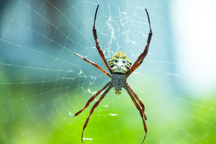 Close-up macro photo of spider sitting in a spider's web