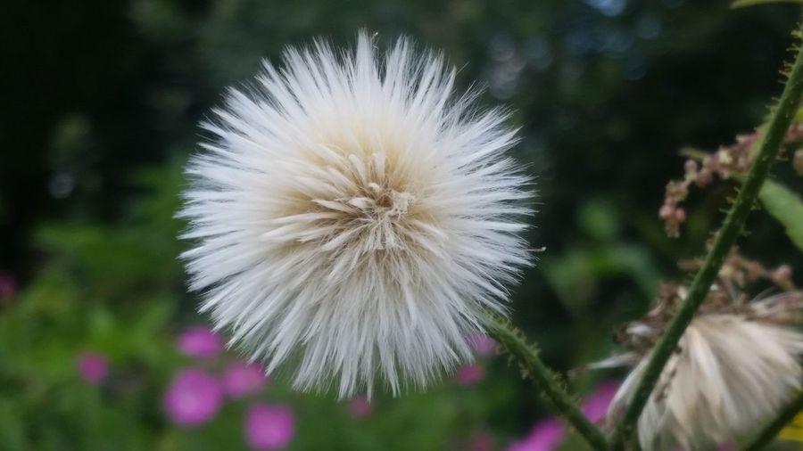 Flower Flowers,