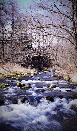 Stream along bare trees in winter