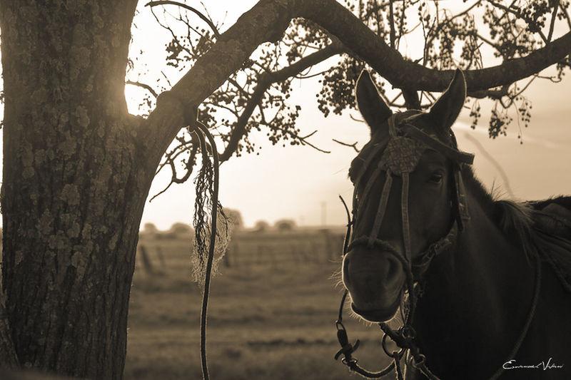 Argentina Photography Blackandwhite Photography Campo Argentino Gaucho Argentino Gauchos Hombre De Trabajo Man And Horse No People Trabajo De Machos  Trabajo Duro Vidagaucha