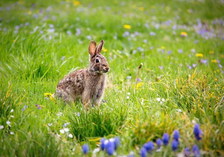 Rabbit sitting in a field