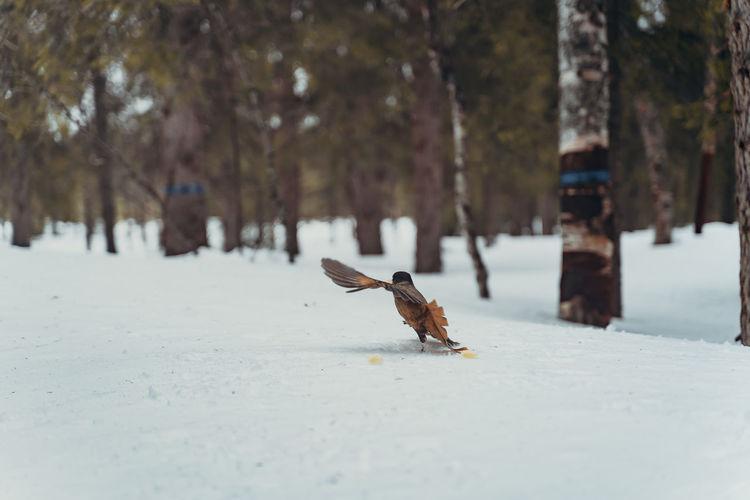 Bird running on snow covered tree