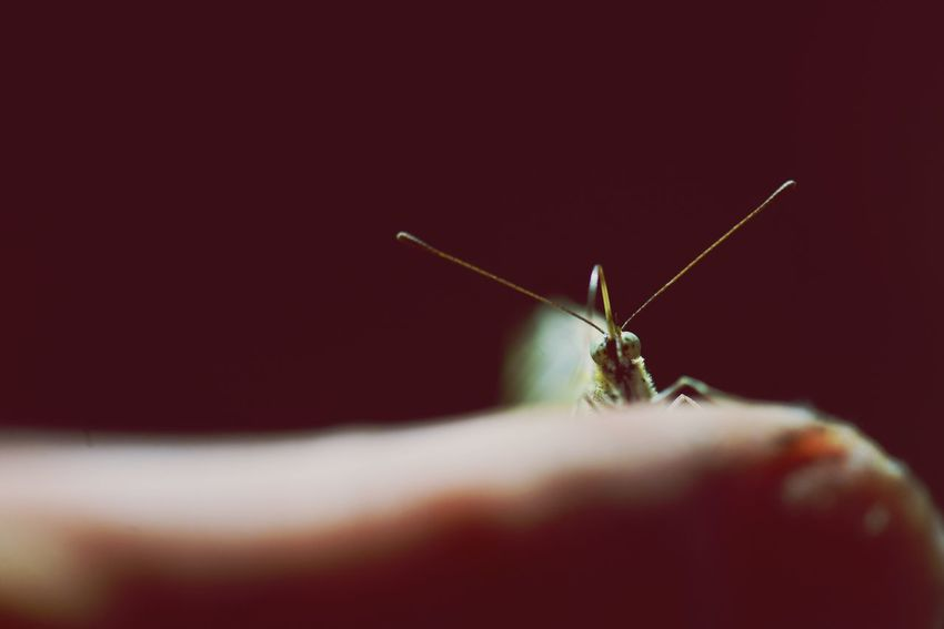 EyeEm Selects Invertebrate Insect One Animal Animal Themes Animal Wildlife Animal Day Macro Copy Space Animal Eye Close-up Animals In The Wild Selective Focus Animal Antenna Animal Body Part Indoors  Human Body Part One Person Nature Zoology