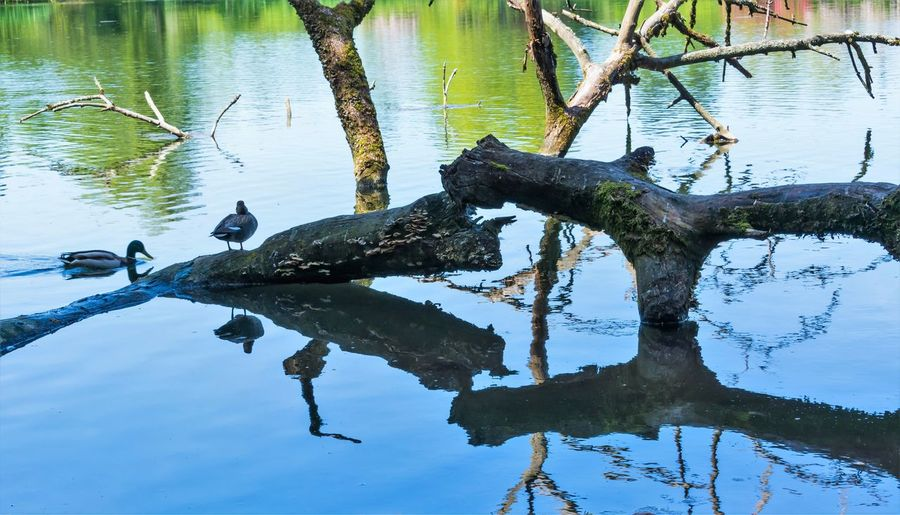 Water Reflection Animal Wildlife Animal Animals In The Wild Animal Themes Bird Tree Lake Vertebrate Plant No People Nature Day Group Of Animals Tranquility Trunk Waterfront Tree Trunk Outdoors Driftwood