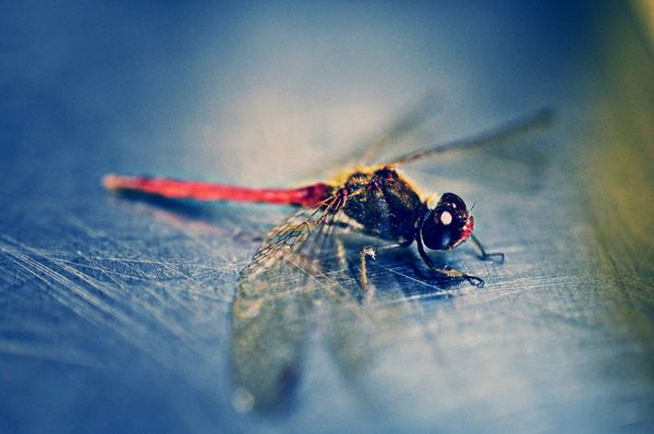 EyeEm Best Shots EyeEm Nature Lover EyeEm Animal Lover Dragonfly