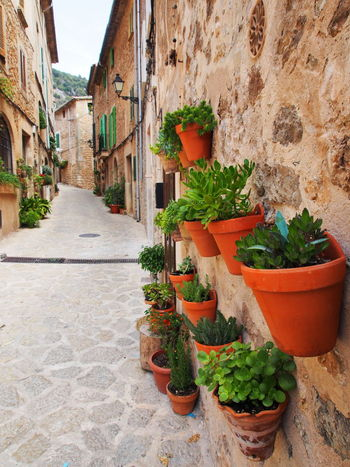 Architecture Building Exterior Built Structure Clay Pot Day Green Color Growth Majorca Mallorca Mallorca Island Mallorcaphotographer No People Oldtown Outdoors Plant Plant Street Street Art Streetphotography Town Valdemossa