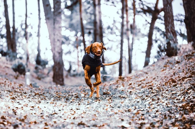 Dog running on tree trunk