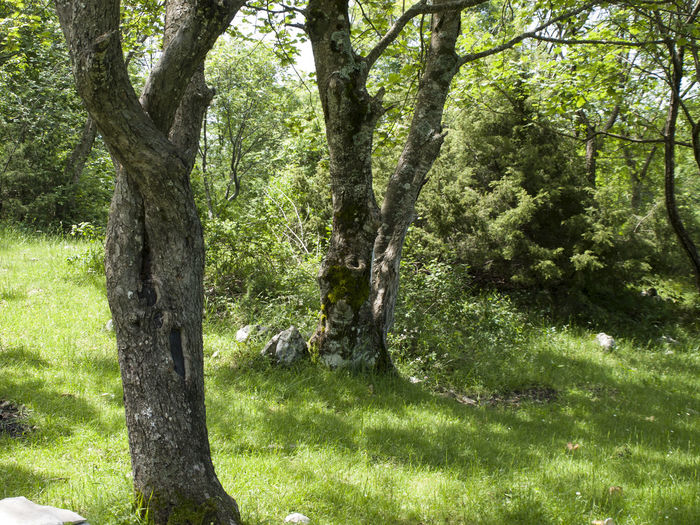 trunk trees