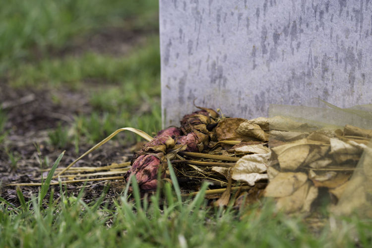 Memorial Day Close-up Decaying Flower Gravestone Outdoors Selective Focus Surface Level