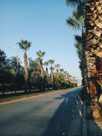 25.08.2017 Antalya Akdeniz Üniversitesi Kampus  KampusLife Agac Missgibi Yeşillik Adınıbilmiyorum Palmiye ? Tree Sky Nature Day No People Road Akdenizuniversity Upök Morning Sabah Green