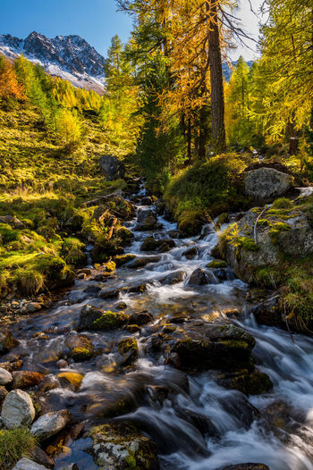 Stream flowing amidst trees in forest
