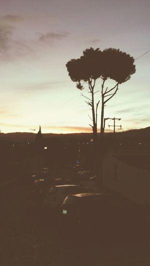 El Sol Cae.El Arbol Observa En Silencio...