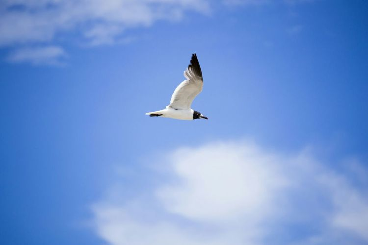 Low angle view of seagull against clear sky