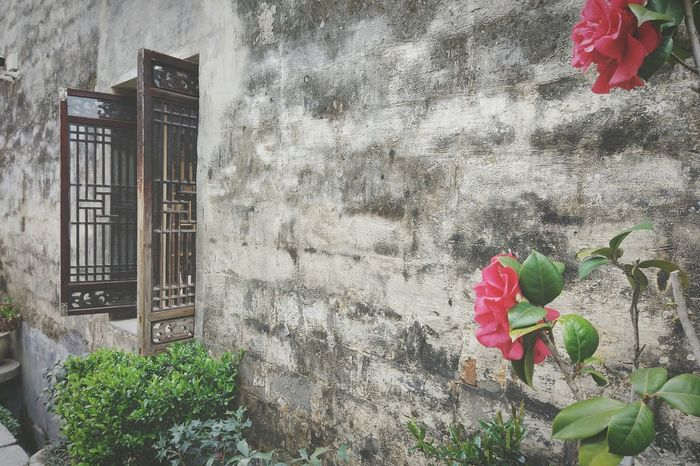 Enjoying Life Chinese Village Taking Photos Check This Out Flowers