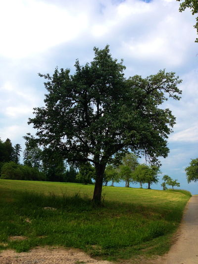 Photography EyeEm Nature Lover EyeEmNewHere Green Color Trees Beauty In Nature Clody Sky Cloud - Sky Day Field Grass Green Color Growth Landscape Meadow Nature No People Outdoor Outdoors Scenics Sky Sunny Day Tranquil Scene Tranquility Tree Way