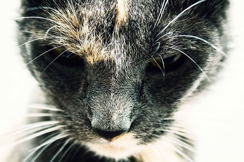 Cat Purrfect Whiskers Thedailykitten Lookingbadass Warriorcat Lookingdown Canon DSLR Photography Canondslrphotography Dslrphotography Canonphoto Canonphotography Canon_official Canon_photos Photooftheday POTD Photograph Artsofvisuals Visualsoflife AOV