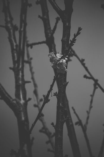 Close-up of frost on branch against sky