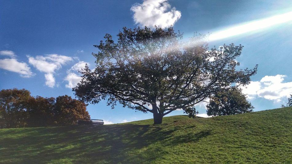 EyeEm Man Tree Sunlight Sky Cloud - Sky Plant Life