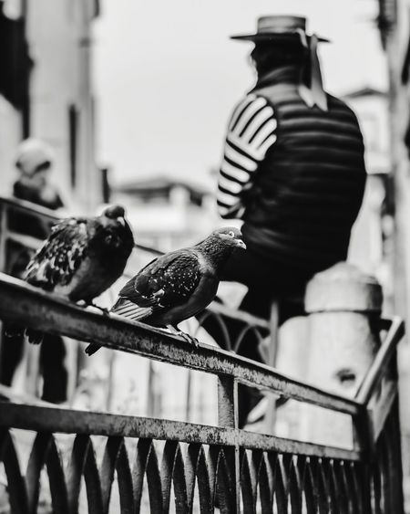 Pigeons and gondolier, black and white composition The Week on EyeEm Editor's Picks Pigeons Gondolier Black And White Composition Black And White Street Photography Composition Leading Lines EyeEm Best Shots Blackandwhitephoto EyeEm Selects Venice Italy Black And White Creative Travel City Close-up