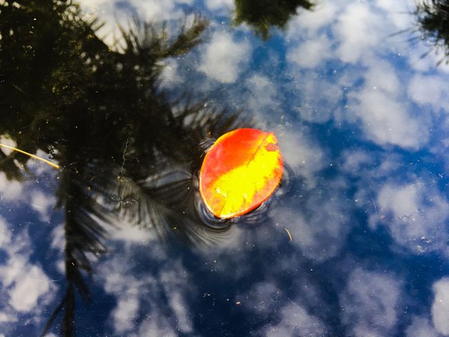 Reflection EyEm Selects Leaf Golden Leaf Water No People Nature Outdoors Beauty In Nature Close-up Underwater Sky Day