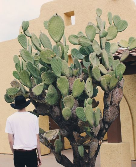 Western Western Explore Plant One Person Growth Real People Nature Succulent Plant Green Color Cactus Outdoors Lifestyles Architecture Leisure Activity Built Structure Rear View