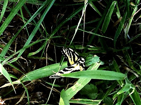 Seattle Nature ShotoniPhone6s Butterfly Washington State Shot With Iphone 6s Greater Seattle