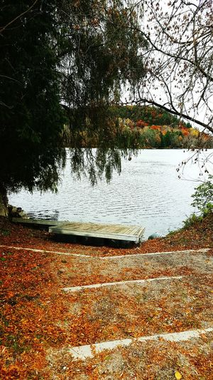 Exploring Wakefield ♡ Tree Nature Outdoors Water Scenery Beautiful Autumn Photooftheday Fall Colors Exploring Wakefield Photography Follow Good Day Grey Day Happy