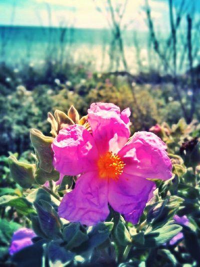 Flores, Bosques Y Naturaleza.